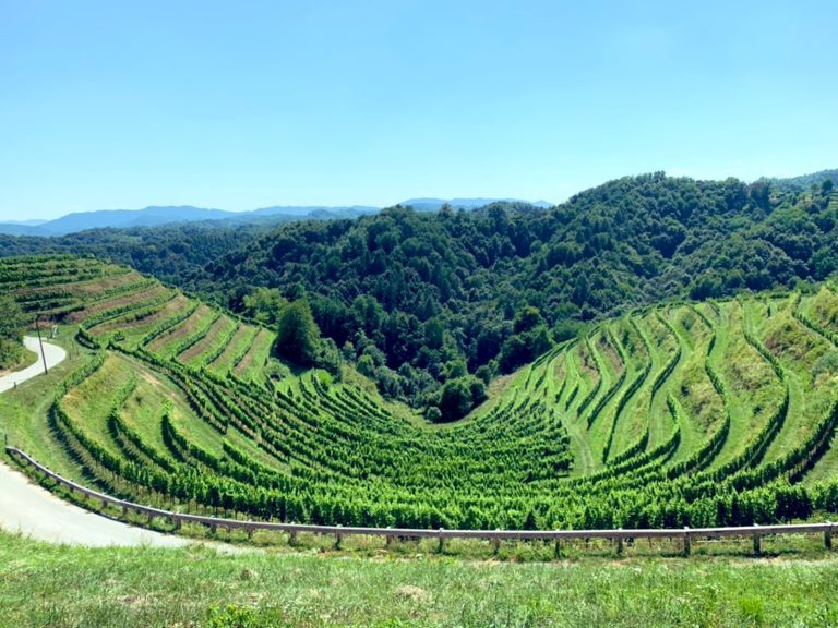 Vignes et eau. Ces vignes sont cultivées en suivant le lignes de niveaux du relief, pour mieux profiter de l'eau