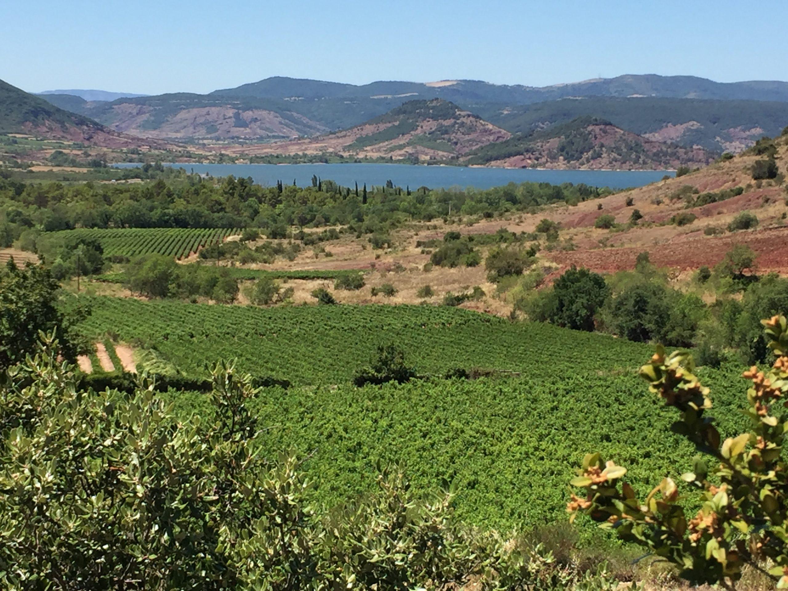 Vigne et eau. Vignobles et ruffe du Salagou, lac artificiel pour le tourisme et l'irrigation